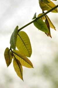 رؤیای پاییزی یک برگ