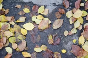 پاییز و باغ